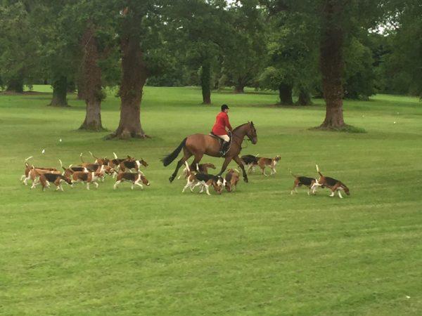 hounds-ireland
